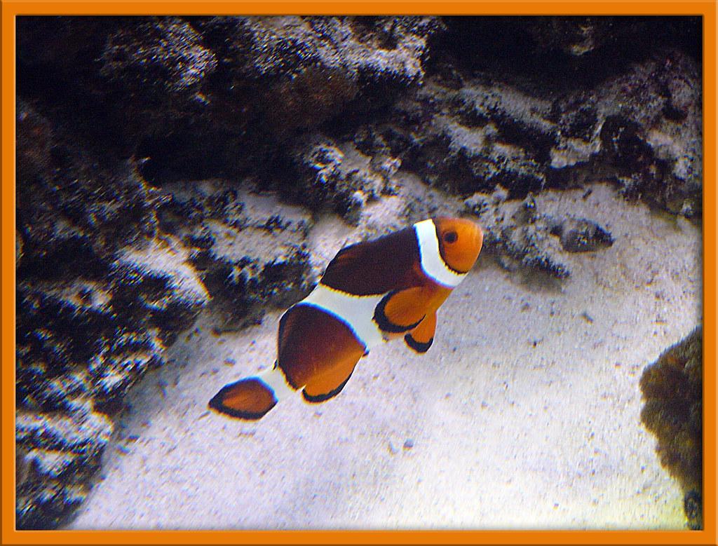 Fish tank movie camera aserno mp3 for Fish tank camera