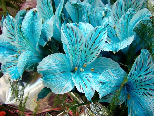 Flores celestes naturales pablo sebasti n d az flickr - Arreglo de flores naturales ...