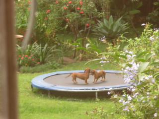 Dogs on a trampoline. | by [ }