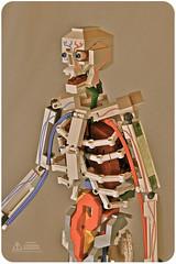 Lego Anatomy Skeleton: 3/4, Torso