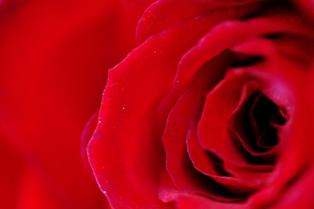 Rose Red Color Chart 1 Nelson Lee Flickr