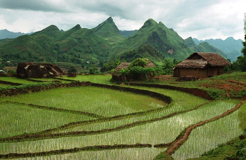Terraced rice paddies near a Red Zao village | by World Bank Photo Collection