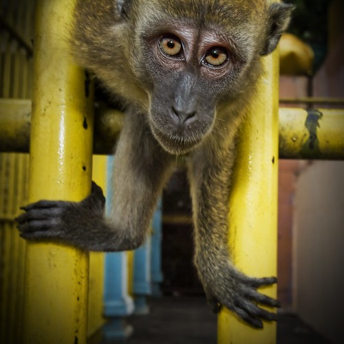 Spider Monkey in your Face | by Stuck in Customs