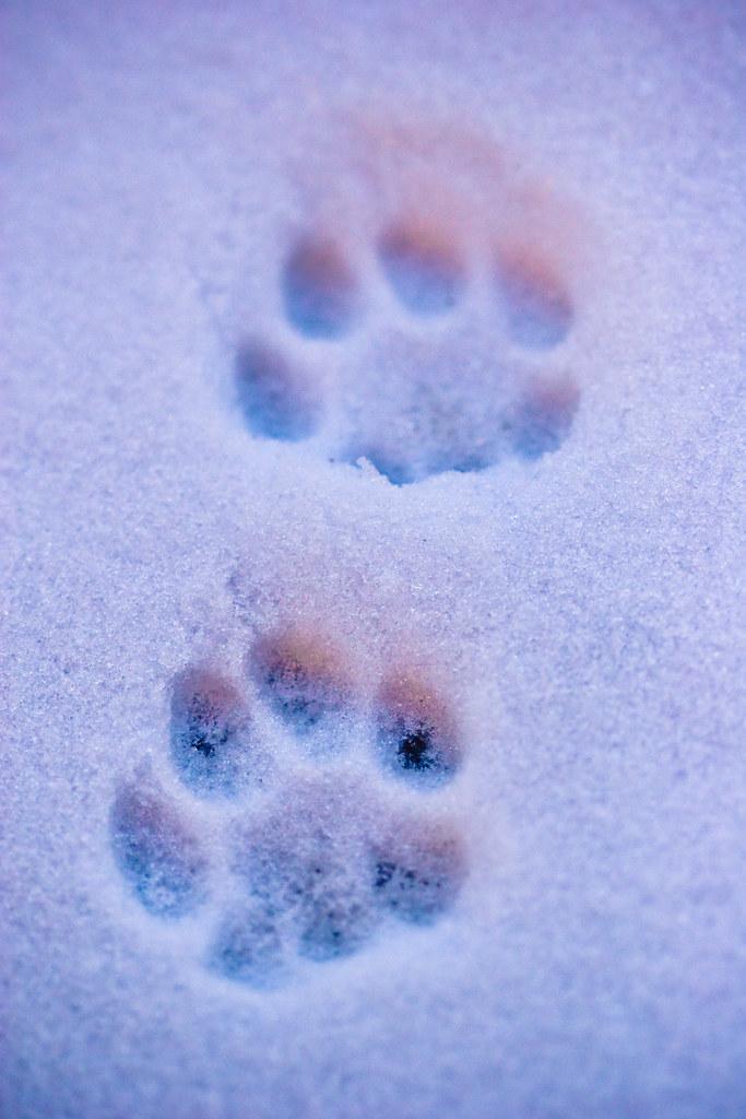 White Cat Snow Background