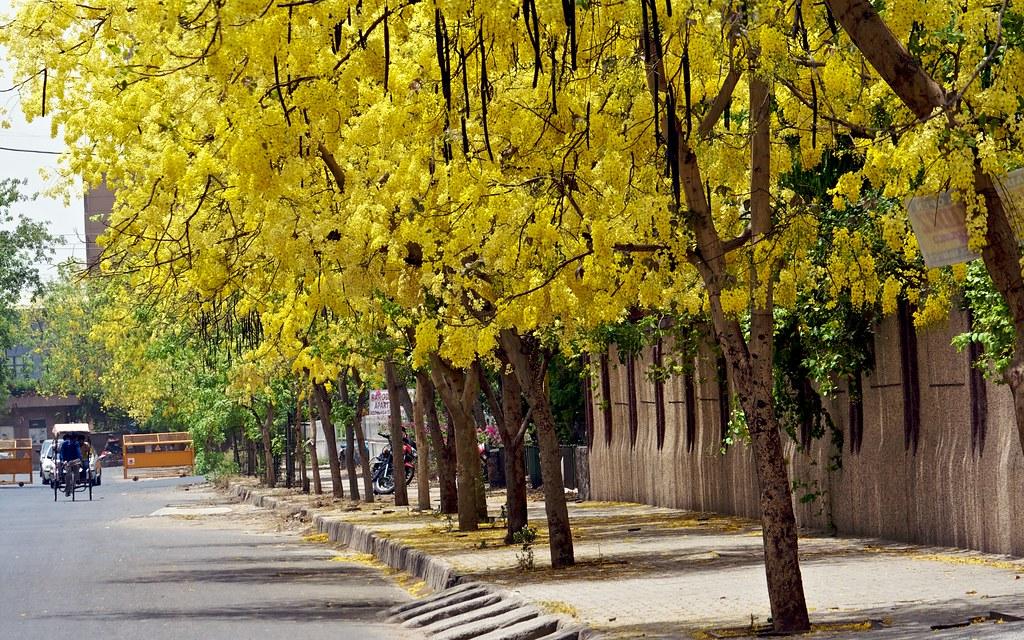 Sona Jhuri The Streets Of Dwarka New Delhi Are Now