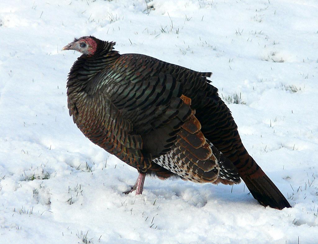 Cold Turkey See Large Explore 352 Dec 6 2007 It