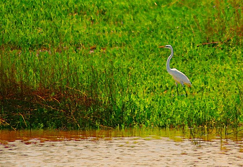 Egret On The Bank Of The Pond | by Big Grey Mare