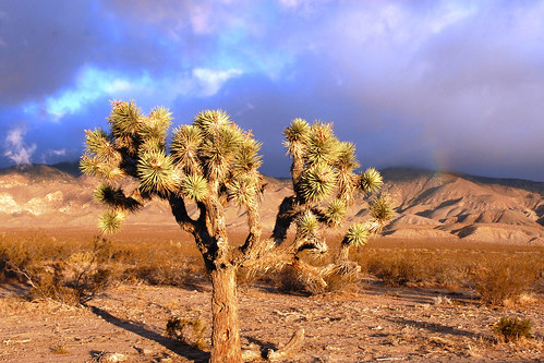 Storm Rolls In Over Mojave Desert | Finally got some ...