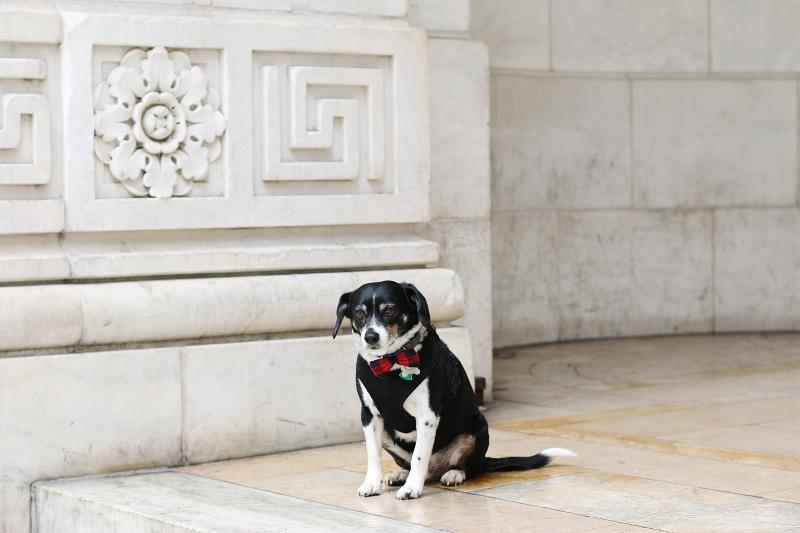 dog-louis-red-plaid-bowtie-10