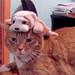 beanie baby cat