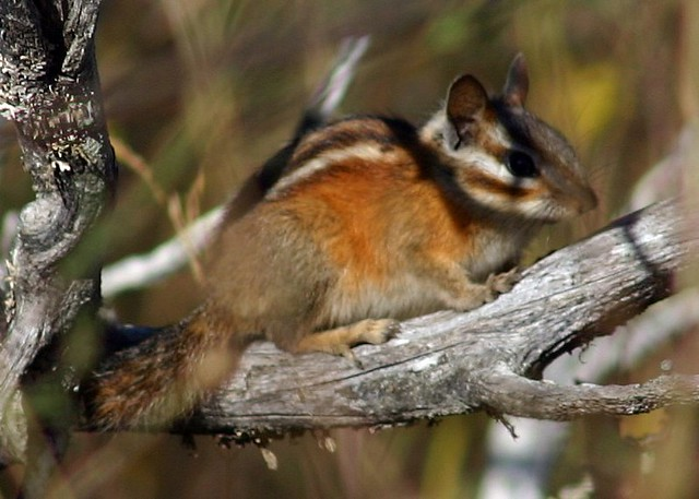 Mammals - bayareabiologycourses.weebly.com