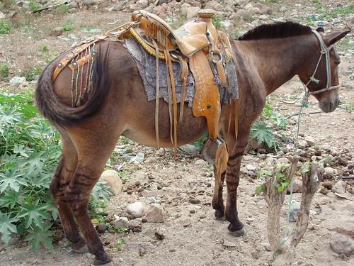 Caballo con silla de montar horse with fancy saddle gra for Sillas para coche grupo 2