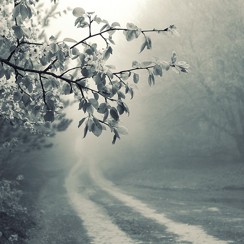 foggy road | by nick lisitsin