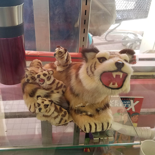 snarling tigers