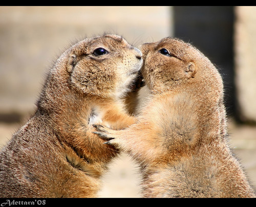 ~Hugs And Kisses~ | by Adettara Photography