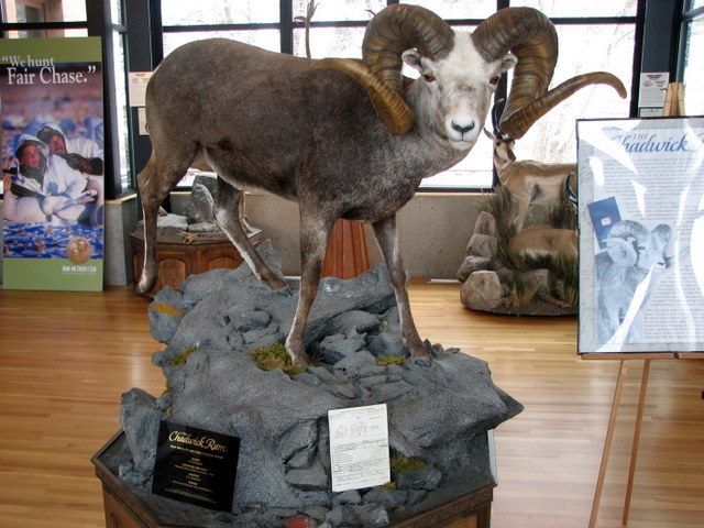 The Chadwick Ram Replica Of The World S Record Stone