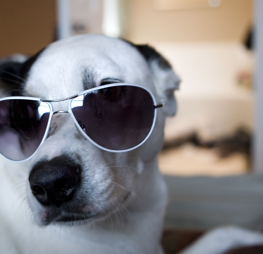 dog with glasses - HD1024×987
