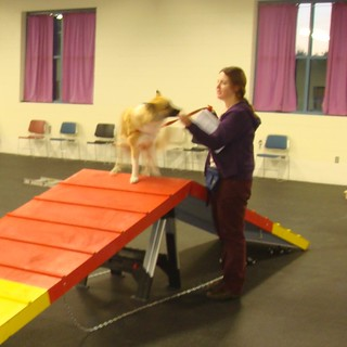 Pre-Agility class | by Lisa G Richards