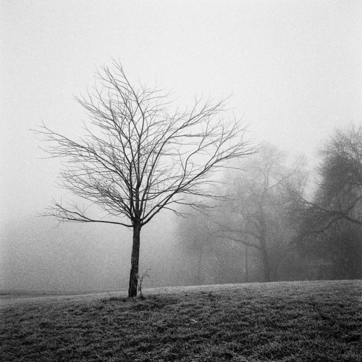 Tree_1-745x745