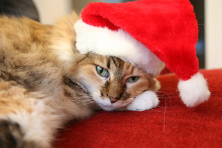 santa claws is exhausted | by vacationtime