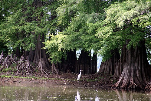 Flower Lake, Mississippi | by asparks306