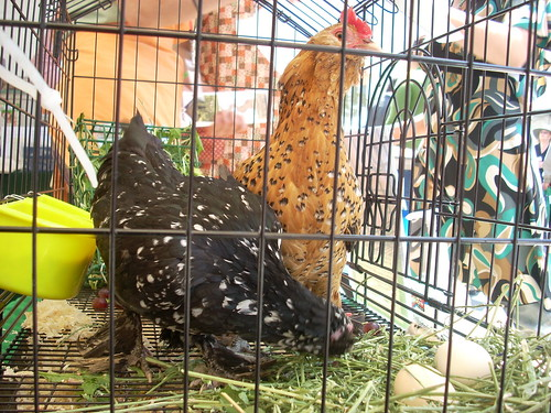 Chickens at Wilshire Center Earth Day Celebration | by LA Wad