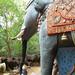 Pudukkottai Ayyanar Horse Temple