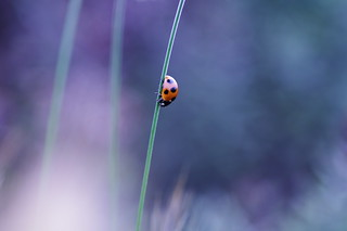 Lady Bird | by comolebi*