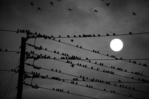 birds with moon | by Jeremy Stockwell