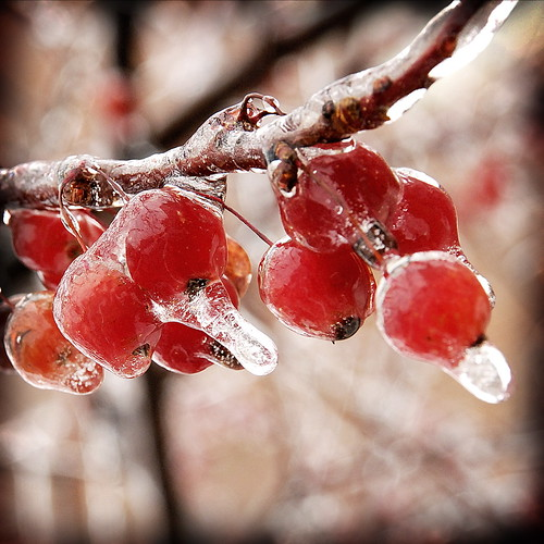 Frozen Fruit | by Whirling Phoenix