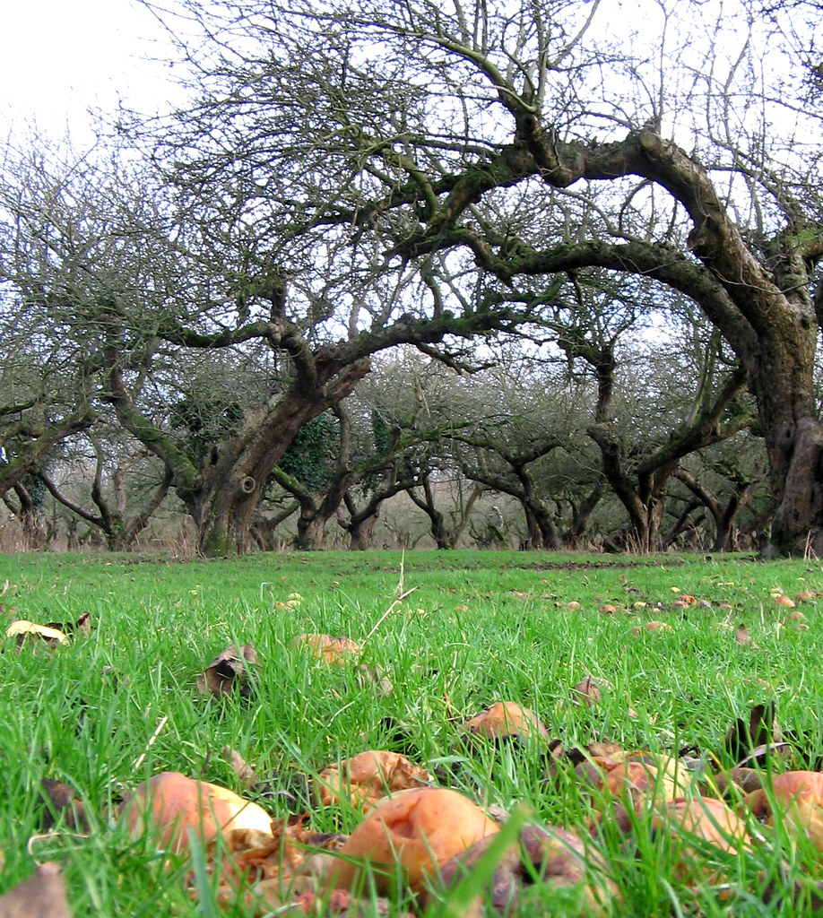 The Old Apple Orchard Wisbech St Mary The Old Apple Orch Flickr