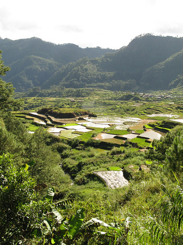 Sagada rice terraces | by Nealy-J