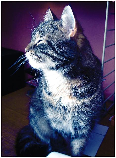 Image Result For Doja Cat