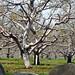 Nagog Hill Orchard