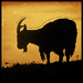 Goat Silhouette - Dictionary of Image