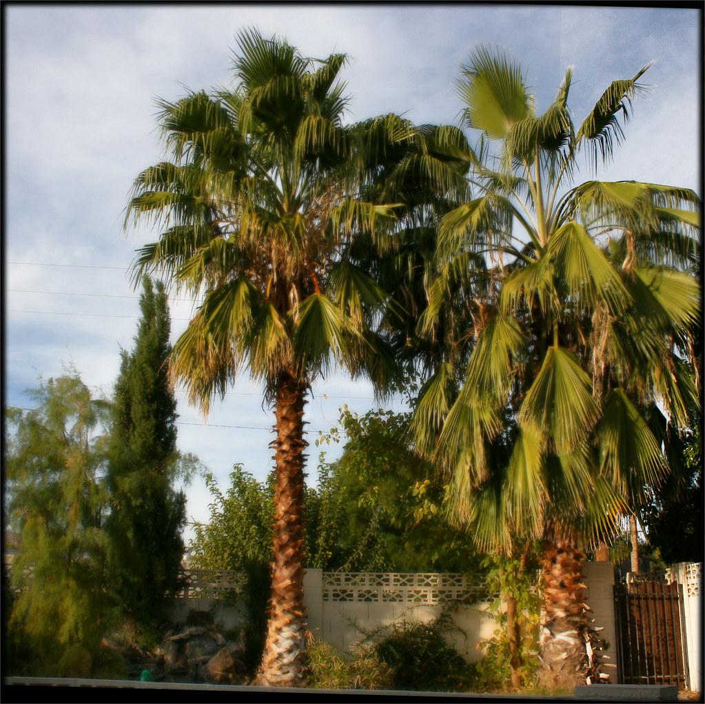 Verna and Bob's Weblog » Palm Cactus - Again   Name Cactus Palm Tree