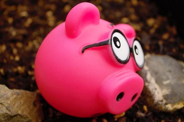 Nervous Pig