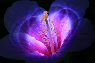 The flower that blooms at Night=) | by ♥ Spice (^_^)