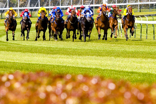 Image Result For Caulfield Cup