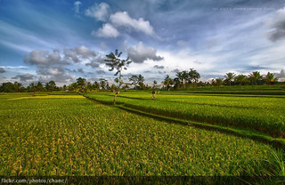 Bali Rice Field | by Christopher Chan