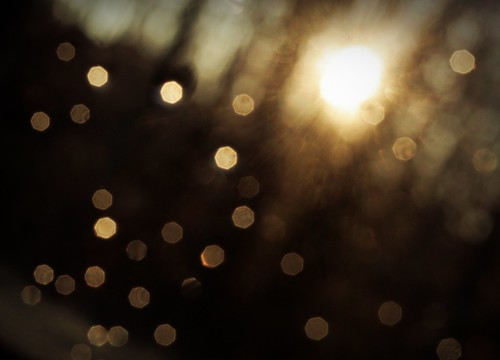 *Cinnamon Bokeh | by *Symes*