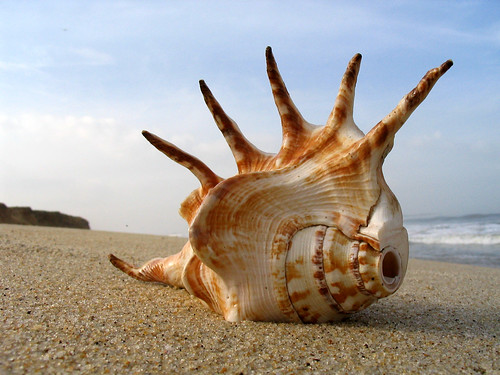 Shell on the Beach | by wildxplorer