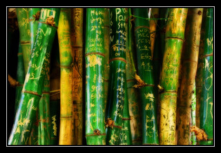 """Message Sticks"" (Albury Botanic Gardens Bamboo) 