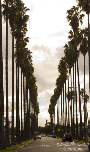 Palm Trees In South Central La Taken At The Street