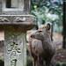 In Nara Park