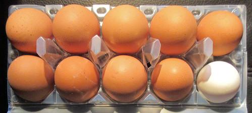 eggs-1-1