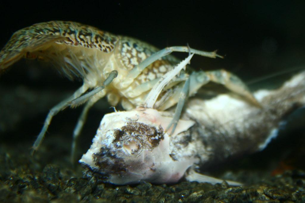 Monster Eating Fish