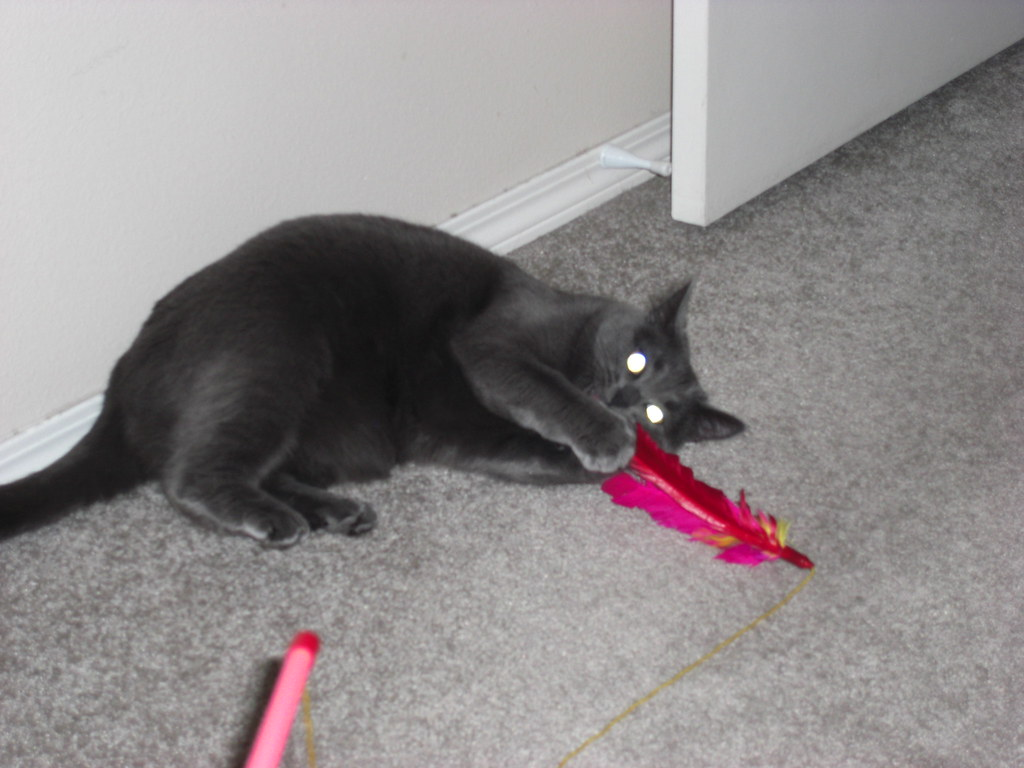 Cat Toy Wand With Moving Bug Wings