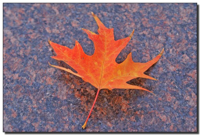 Granite Pictures Additional Name Usage: Autumn Leaf