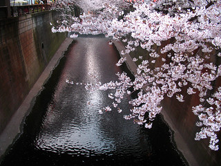 Encroaching blossoms | by nightchrome